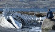 'Leviathan': En guddommelig film