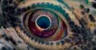 'Voyage of Time' på CPH:DOX: Terrence Malick har skabt en stor visuel oplevelse