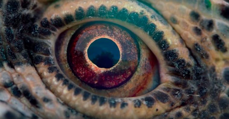 'Voyage of Time': Terrence Malick har skabt en stor visuel oplevelse