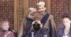 Jack Gleeson aka. King Joffrey havner i Photoshop-battle med en lettere panikslagen mops
