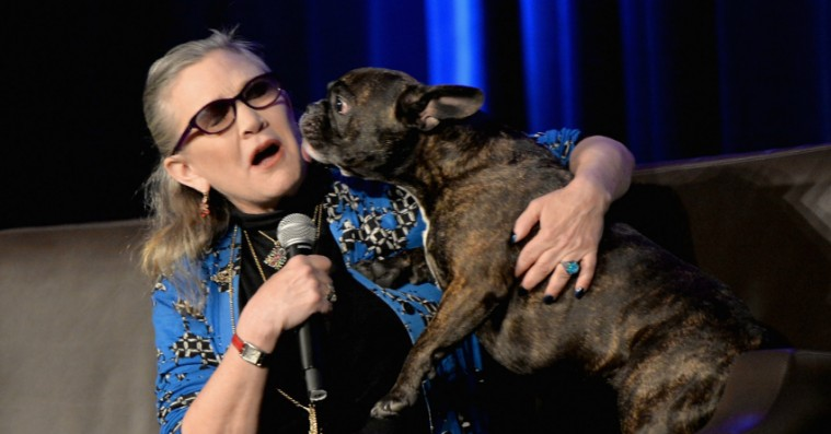 Carrie Fishers efterladte hund har en skæv cameo i 'Star Wars: The Last Jedi'