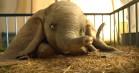 Tim Burtons 'Dumbo' i liveaction ser hjerteskærende ud – se den første fulde trailer