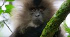 Netflix nye naturserie 'Our Planet' ser guddommeligt smuk ud