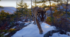 Netflix' nye naturserie 'Our Planet' ser guddommeligt smuk ud