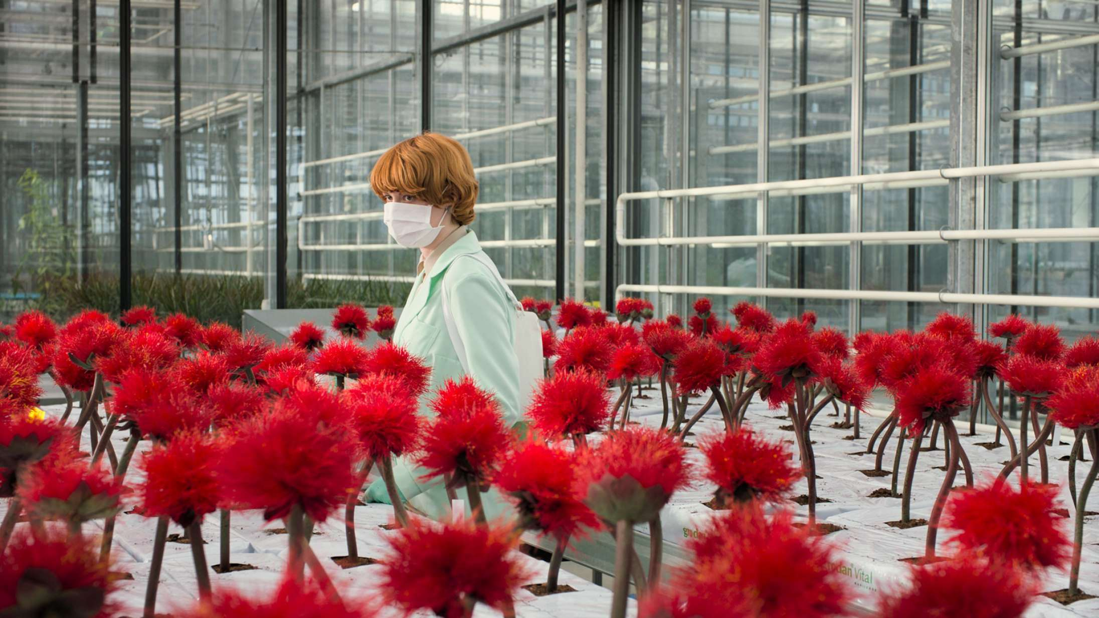 'Little Joe': Psykologisk plantegyser er modelækker og krybende uhyggelig