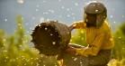 'Honningland': En af årets bedste dokumentarfilm rammer lige i hjertekulen
