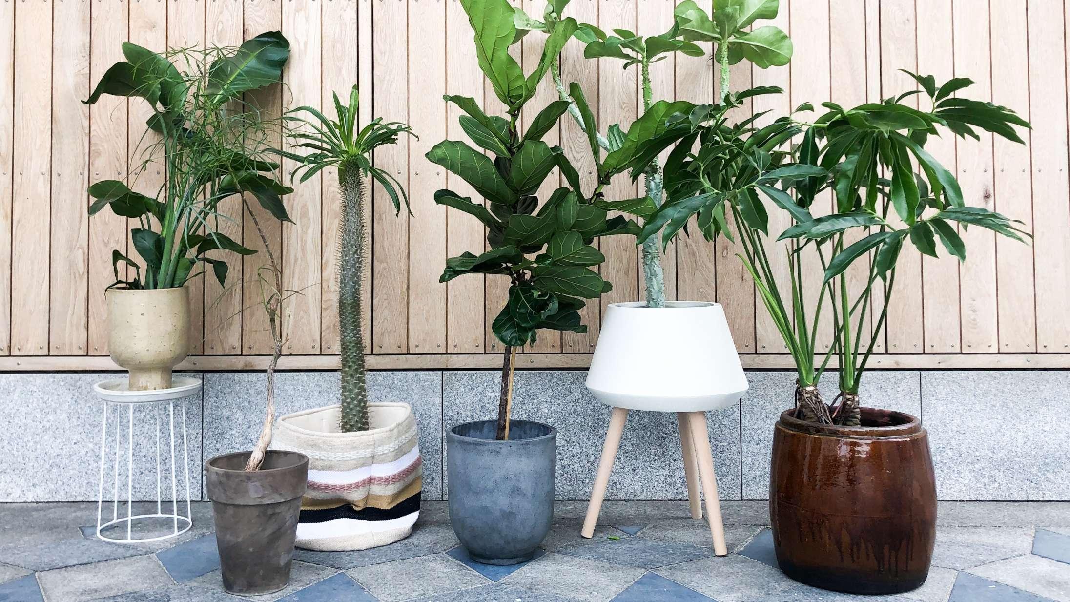 Har dine planter brug for